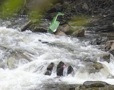 Image: Leteaksjonen i Kvam: Søker med drone både over og under vann